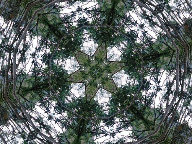 Mandalas Mandala Psicodelico Caleidoscopio Flower Nature Plant