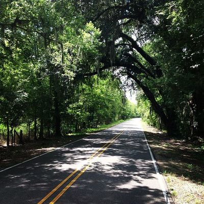 Nature Creepy Trees Haunted Woods Outdoors Forest Rural Scary Louisiana South Shortcut Rsa_nature Rsa_trees Trailblazers_rurex Trailblazers_rural LitratongPinoy Gulfcoast Deepsouth Ig_crossroads Nexus_green Trb_countryroads Oldsouth Rsa_green Onlylouisiana Scaryforest Louisianatravel Scarywoods Tree_tunnels Lp_vanishingpoint