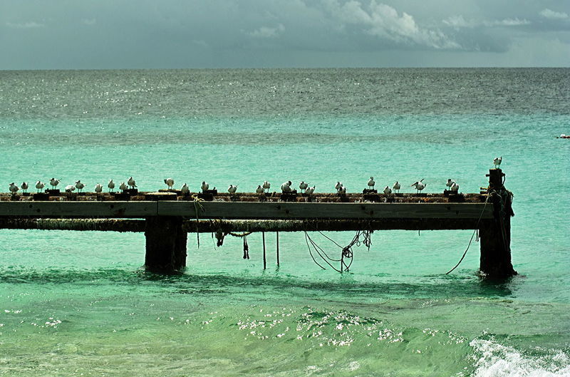 Seagulls resting on an old landing in Klein-Curaçao Animal Wildlife Animals In The Wild Beauty In Nature Birds Coordination Day Horizon Over Water Large Group Of Animals Motion Nature Outdoors Sea Seabirds On An Old Pier Seagulls Sky Togetherness Water