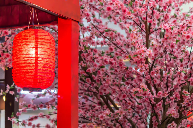 Close-up of cherry blossom hanging on tree