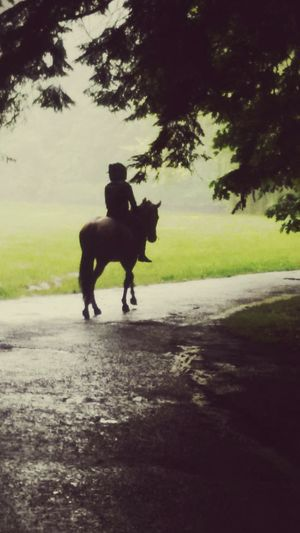 Nature Poland Pszczyna Park Walking To School  Horse Horseback Riding Foggy Day