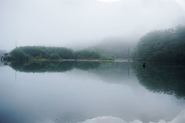 Nature Water Tree Reflection Tranquility Tranquil Scene Lake Beauty In Nature Scenics Idyllic Fog Non-urban Scene Outdoors Sky Day No People Travel Destinations Early Morning Landscape 大正池 Taishoike Lakeside Mist Hazy  at Kamikouchi in Nagano Prefecture,Japan