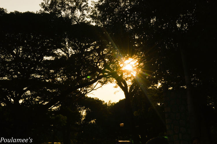Arayofhope Glowing Lens Flare Silhouette Sun Sunbeam Sunlight Sunset