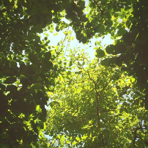 木漏れ日 Sunlight Filters Through The Trees - The Interplay Between The Light And The Leaves. Komorebi