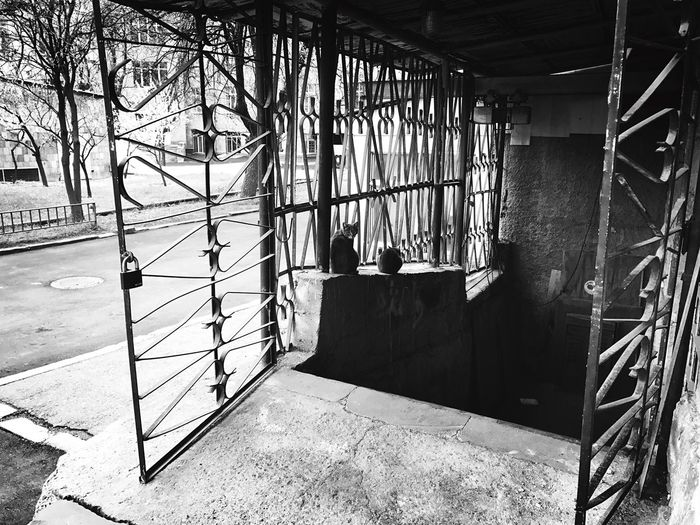 Architecture Built Structure No People Day Outdoors Shushannaagapiphoto Shushannaagapi City Iphonephotography Mobilephotography Iphoneonly Lifestyles Urban Blackandwhite Cat Cats EyeEmNewHere The Secret Spaces