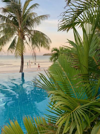 Nature Sea Water Beauty In Nature Cambodia Koh Rong Samloem Island Life Island Scenics - Nature Tropical Climate No People Palm Leaf Luxury Travel Destinations Tourist Resort Pool Growth Swimming Pool Plant Palm Tree Tranquility Tranquil Scene Outdoors Green Color Beach