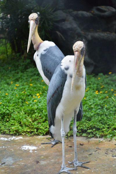 Bird Bird Photography Bird Collection Bird In The Zoo Birds Life Life Of Birds ใน Thailand