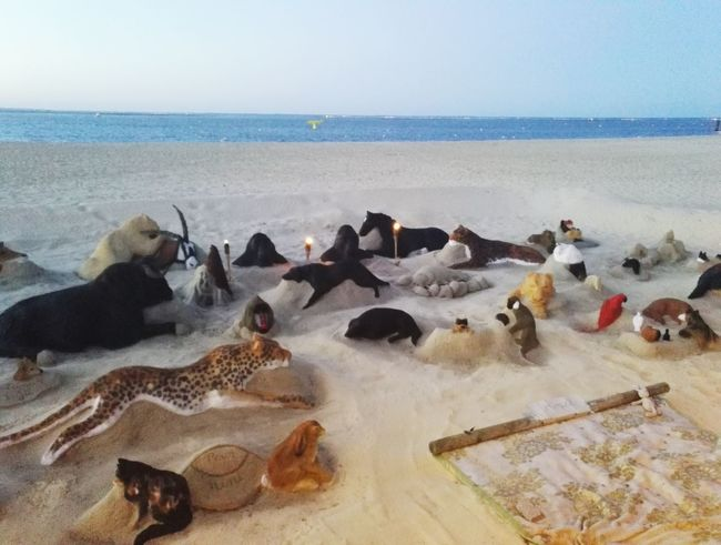 sand animals...
