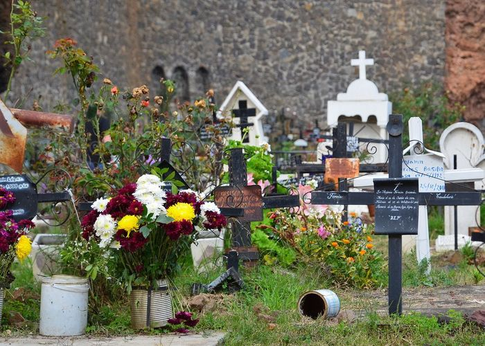 View of flowering plants at cemetery
