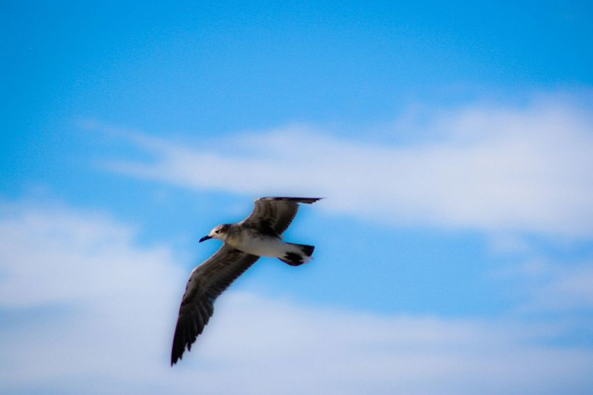 Another Beautiful Day Beautiful Sky Blue Sky Birds Taking Photos Sitram Photo's Lookup AnotherDay Summerviews