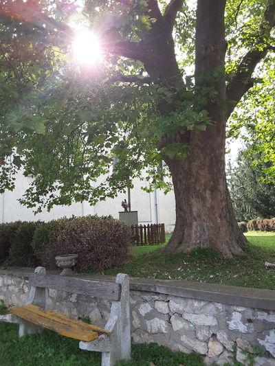 Tree Church Sun
