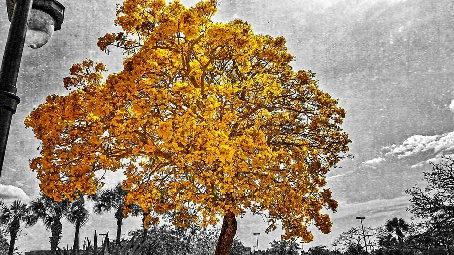 Floridalife Fauna Flower Photography Flower Collection Florida Nature Photography Naturelovers Nature_collection Nature Eyeem Market EyeEm Gallery Pollination Florida Nature EyeEm Nature Lover Colorsplash Beautiful Tree Tree_collection  Tree Art Tree And Sky Showcase April