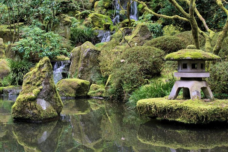 Scenic View Of Pond In Japanese Garden