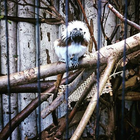 Freeanimals Zoo Sad Moment Sad Monkey