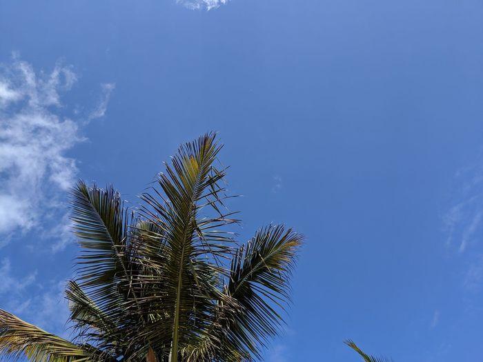 Tree Flower Palm Tree Blue Sky Close-up Plant