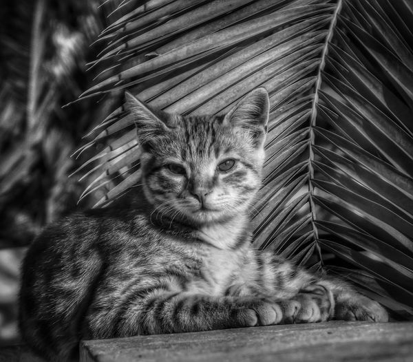 This is a capture of a cat taken last year on the Greek island of Santorini Looking At Camera One Animal Animal Themes Feline Domestic Cat Close-up No People Close Up Photography Creative Light And Shadow Malephotographerofthemonth The World Through My Eyes Fujifilm EyeEm Masterclass Cats Of EyeEm Cat Photography Catsoftheworld Portrait Black And White Black & White Photography Black And White Bnw_captures Bnw Photography Monochrome Photograhy