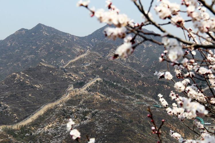 Chinese Wall Close-up Nature No People Tranquility Great Wall Of China Landscape Cerryblossom