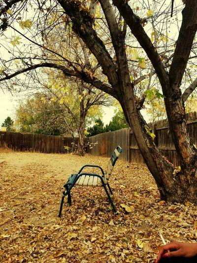 Fall leaves have consumed my yard. Tree Outdoors Nature Backyard Ciggarette Break Fall Fall Leaves Fall
