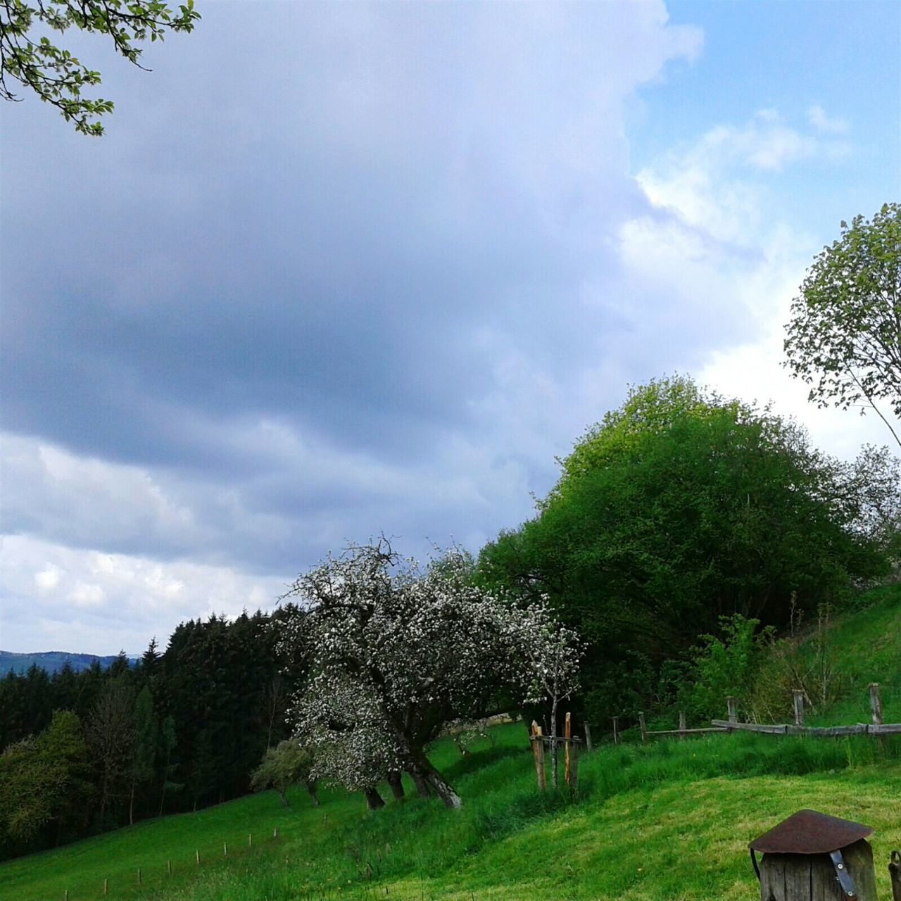 tree, sky, cloud - sky, nature, grass, beauty in nature, growth, day, green color, landscape, scenics, field, tranquility, no people, outdoors, animal themes, domestic animals, mammal