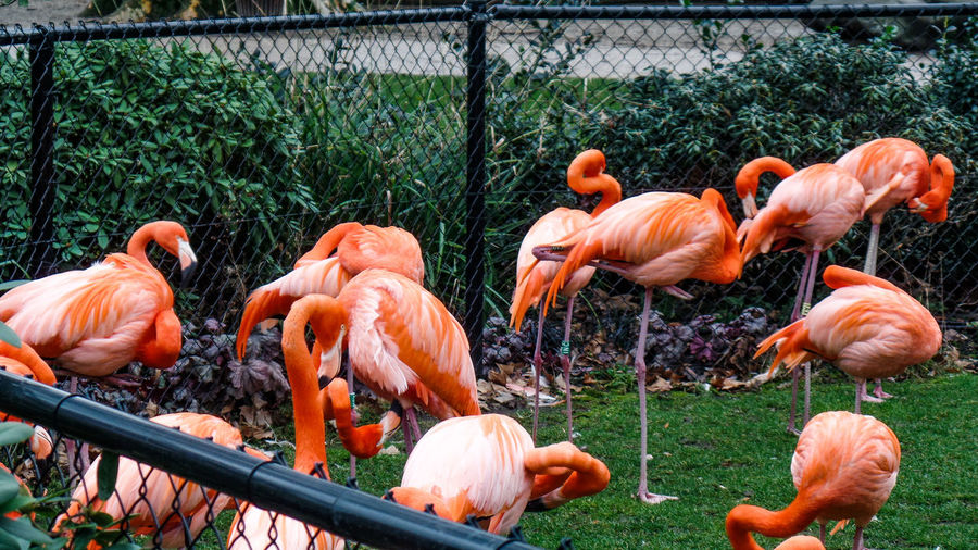 Group Of Animals Animal Themes Flamingo Animal Vertebrate Bird Animals In The Wild Animal Wildlife Orange Color Large Group Of Animals No People Nature Day Water Beauty In Nature Plant Outdoors Land Flock Of Birds Animal Neck