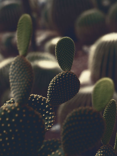 closeup pattern of cactus with vintage color dark light effect, nature background Botany Cactus Close-up Day Freshness Green Color Growth Houseplant Indoors  Nature No People Plant Selective Focus Spiked Thorn Wool