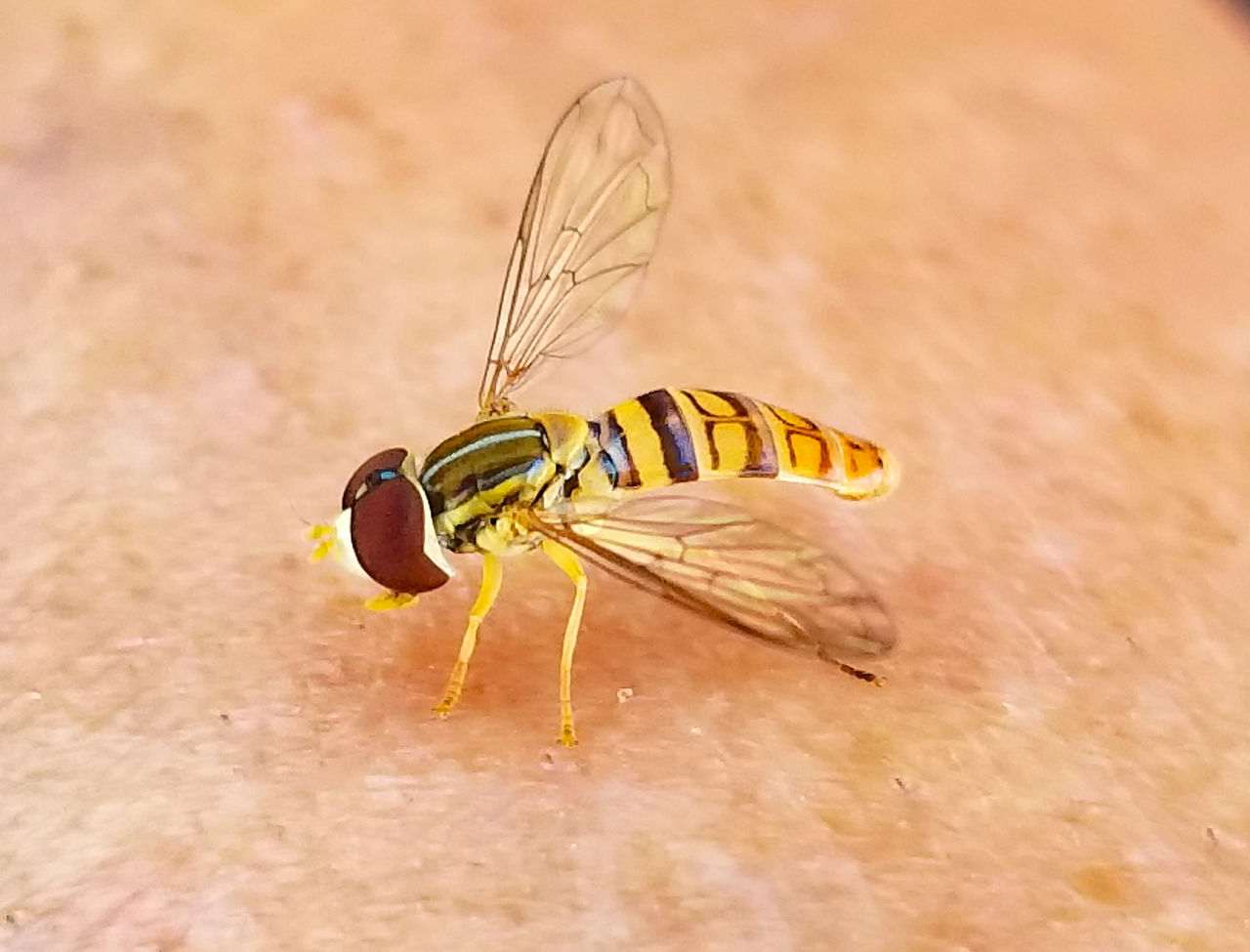 insect, animal themes, one animal, animals in the wild, animal wildlife, no people, close-up, day, outdoors, nature