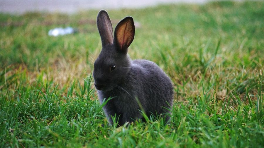 Bunny  Tellmehowyoureallyfeel Modeling Shoot Hotday First Eyeem Photo I'm feeing beatiful if you ask me 🕊