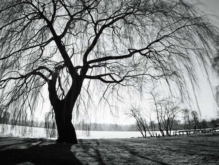 Tree Nature No People Tranquility Water Outdoors Beauty In Nature Schwerin Mecklenburg-Vorpommern Schwerin Check This Out At The Park Blackandwhite Blackandwhite Photography Black & White Blackandwhitephotography Cold Temperature Black&white