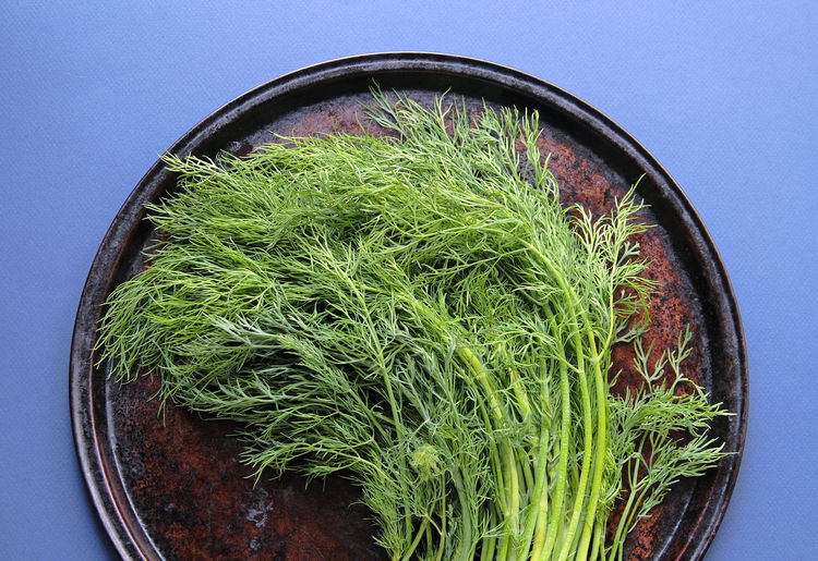 Dill stalks and leaves on a baking pan on a blue background