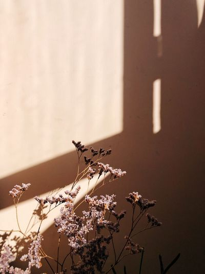 Spring mood Light And Shadow Authentic Simplicity Natural Beauty Backgrounds Springtime Flower Collection Floral Copy Space Warm Light Warm Colors Sunlight No People Shadow Wall - Building Feature Nature Day Plant Close-up Flower Focus On Foreground Sand Growth Sunny Springtime Decadence