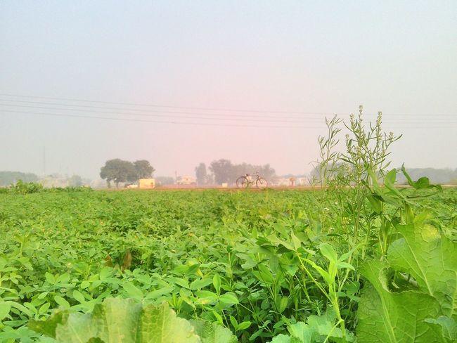 Punjab Fields Realworld