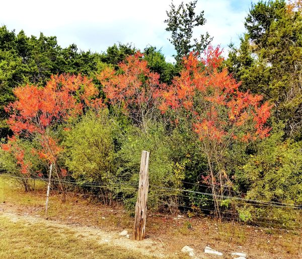 Fall Colors Outdoors Growth Nature Day Tree No People Beauty In Nature Fall Beauty Fall Leaves Fall Season Fall_collection Hill Country Texas
