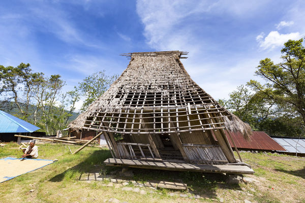WOLOGAI, INDONESIA - MAY 14: An unidentified woman sifts through rice next to a damaged traditional house in the traditional village in Wologai, Indonesia on May 14, 2017. Coffee Houses INDONESIA Moni Rice Tourist Travel Tree Art Attraction Authentic Culture Destination East Nusa Tenggara Ethnic Hard Wood House Kelimutu Landmark Sculpture Tourism Traditonal Tribe Village Wologai