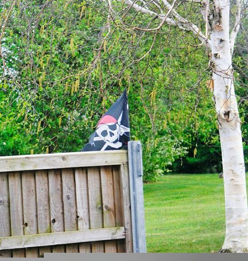 Jolly Roger Flag Grass Tree No People Day Green Color Outdoors Nature Growth Through The Window