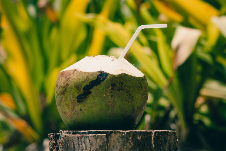 Open coconut with a straw for drinking its milk or water, Phi Phi Island, Thailand Coconut Beauty In Nature Close-up Day Focus On Foreground Food Food And Drink Freshness Fruit Green Color Growth Healthy Eating Leaf Nature No People Outdoors Plant Plant Part Plant Stem Selective Focus Wellbeing