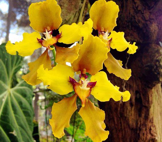 Orquídeas 💙 Orquídea Orchidslover Plantas Plants Flowers Flores Orquídea❤ Nature Naturaleza