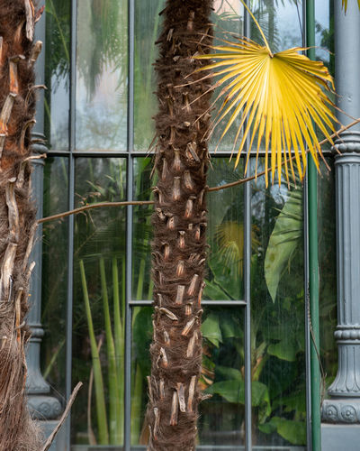 Close-up of yellow flowering plants seen through window