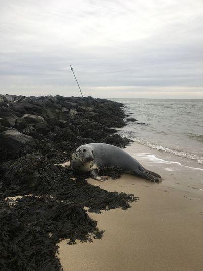 Seals Seals Sea