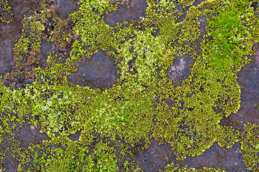 moss Green Color Growth Plant No People High Angle View Day Moss Nature Full Frame Water Outdoors Beauty In Nature Directly Above Textured  Close-up Plant Part Leaf Wet Lichen Swamp