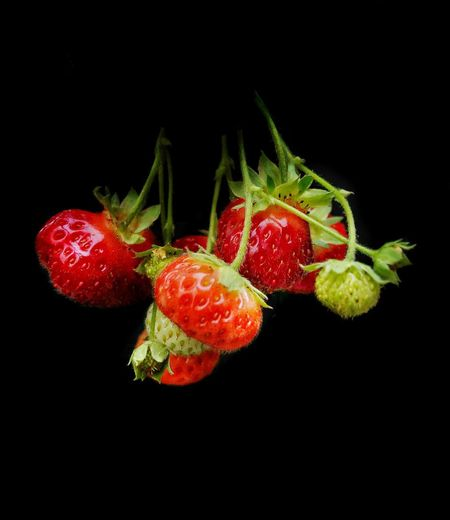 Strawberries Fruit Food And Drink Healthy Eating Food Black Background Studio Shot Berry Fruit Freshness Wellbeing Close-up Red Juicy Ripe Healthy Lifestyle Still Life Nature Strawberry No People