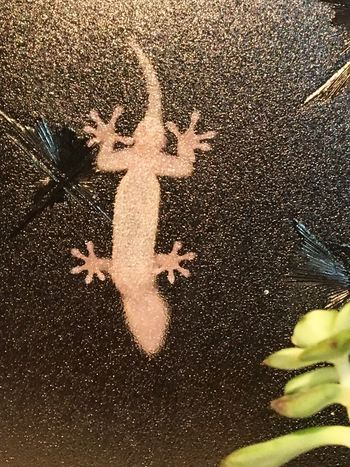 Subject : A House Gecko on the Other Side of the Window Glass, Looking for a Chase. Animal Themes Animals In The Wild Nature House Gecko Looking For A Chase Night Indoors  No People High Angle View Close-up . Taken in Kure , Japan on Aug. 19, 2017 ( Submitted on Aug. 25, 2017 )
