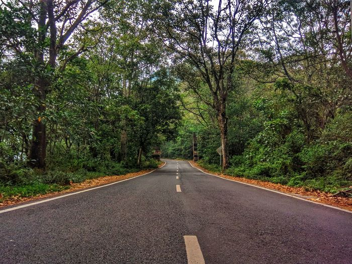 hidden road from mojokerto Mojokerto Pacet Tree Road Asphalt Street Diminishing Perspective Green Color Sky Empty Road Treelined EyeEmNewHere