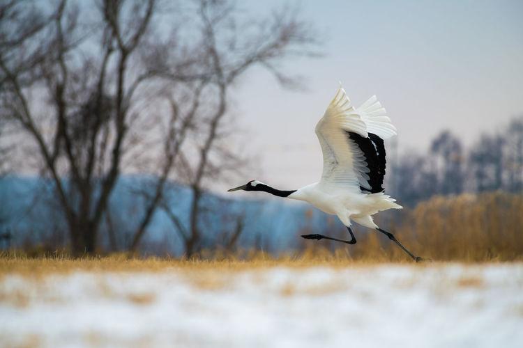 Crane on field