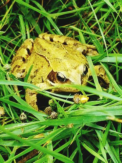Animal Wildlife Frog Under Growth Nature