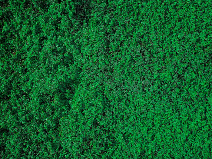 Abstract Backgrounds Birdseyeview Close-up Day Drone  Field Full Frame Grass Green Color Leaves Nature No People Outdoors Pattern Textured  Trees