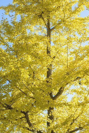 Yellow Plant