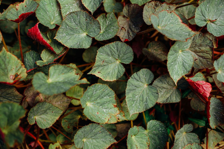 Leaf Plant Part Plant Growth Full Frame Green Color Close-up Nature Beauty In Nature Backgrounds Leaves Outdoors Focus On Foreground Red