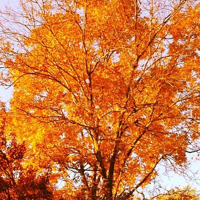 Autumn Gold. It was good to get out after a day at the Fruit Stand. #iphoneography #jomo IPhoneography Jomo