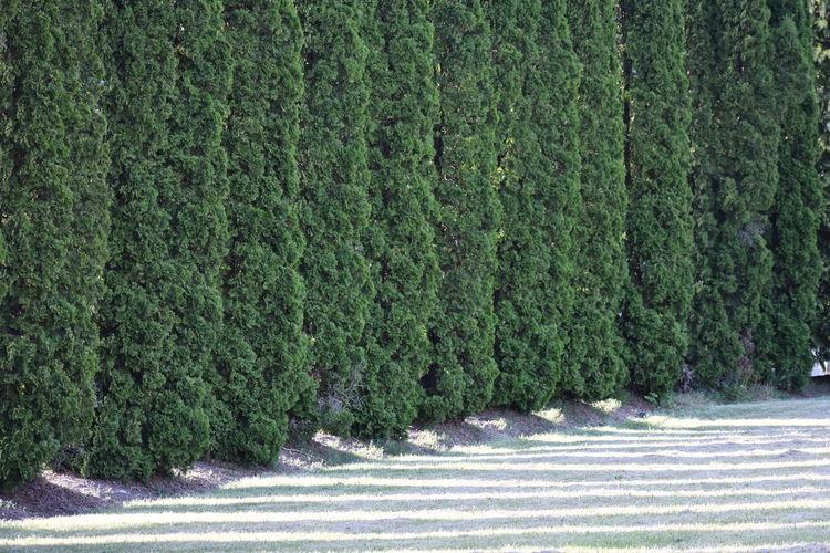 green wall Tree