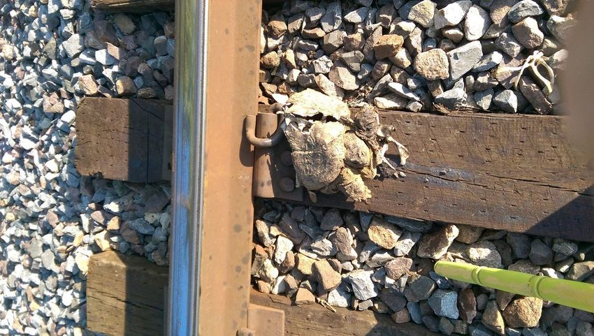 The Purist Crime Scene1 Beauty Of Decay R.I.P. Turtle Love Wrong Side Of The Tracks Leavin' On A Southern Train Eye Am Nature Sunlight And Shadow CIRCLE Of LIFE Turtle Tag